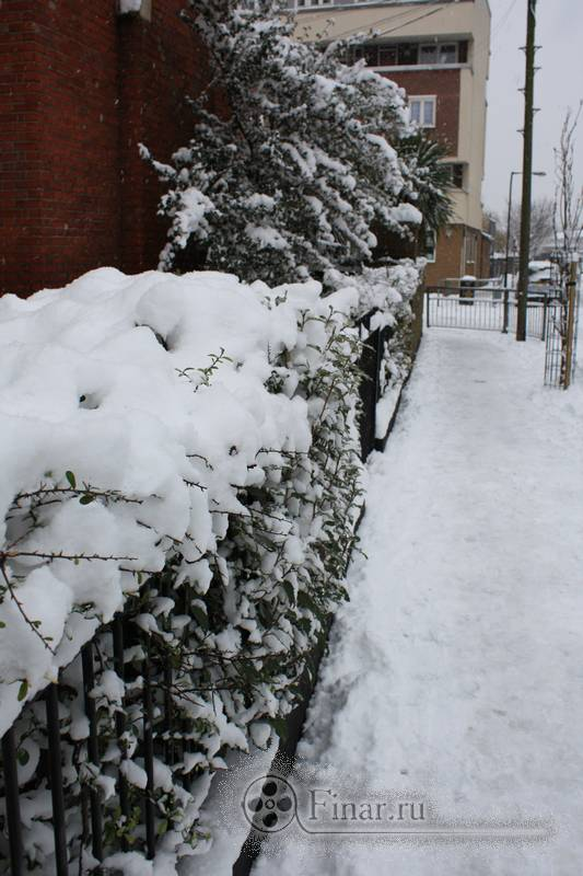 Лондонский снегопад 2009 - зеленые кусты