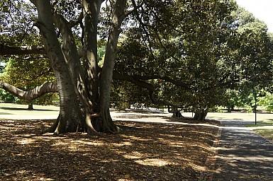 Australia-2012_52.jpg: 950x631, 251k (2012-11-25, 06:23)